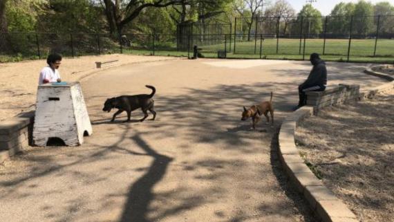 Dog Park at Pottawattomie Park