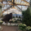 "A woolly mammoth, and white poinsettias and plants are on display in the Show House at the Lincoln Park Conservatory as part of the ""Ice Age"" Holiday Flower & Train Show."